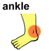 ankle2
